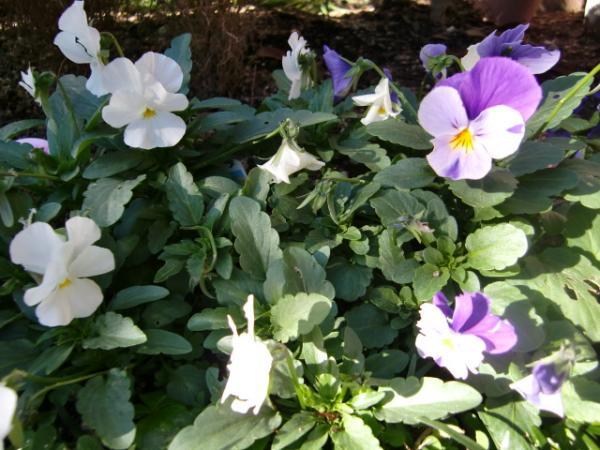 1208お花