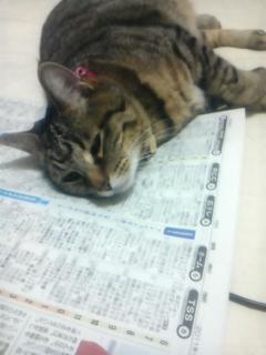 12月16日新聞上のチーノ