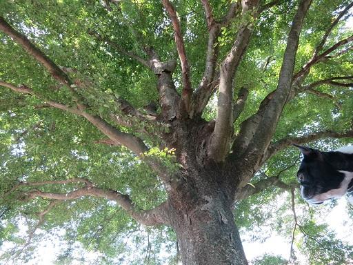 9-29大木とふる