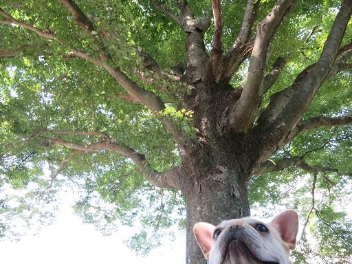 9-29大木とうた