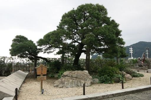 10-14お宮の松2