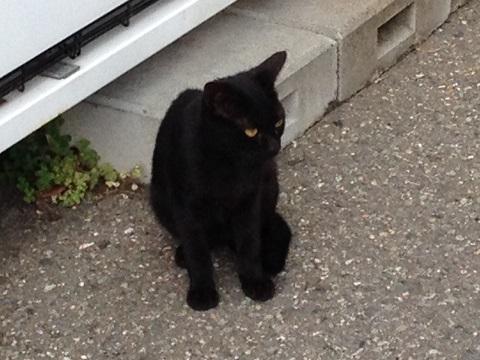 10黒猫2