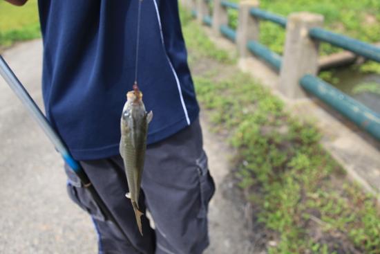 釣り&今日のプリン 011