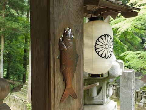 放浪王-精進落とし鯉