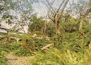 亜熱帯の公園
