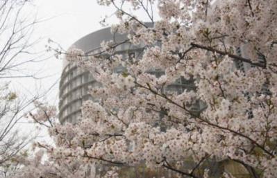 桜&病院1