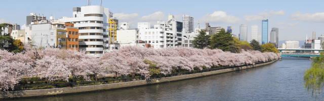 桜05(スイングパノラマ)