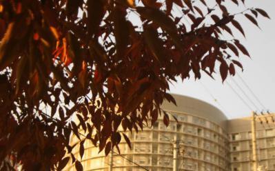 秋のKTN病院