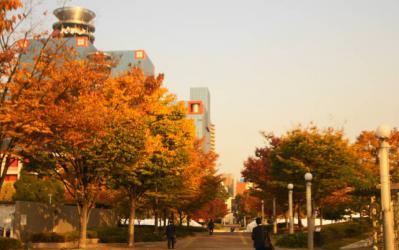 秋の扇町公園