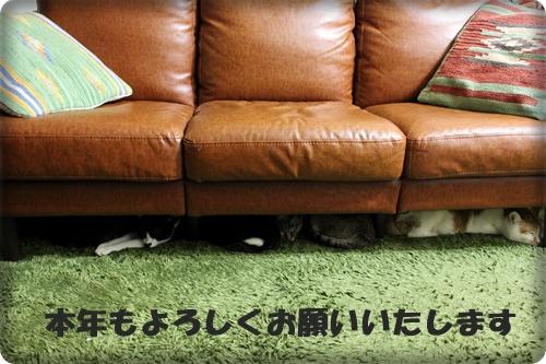 IMG_5019G.jpg