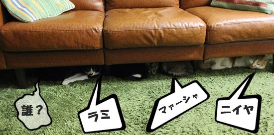 IMG_5027G.jpg