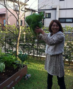 収穫しました。
