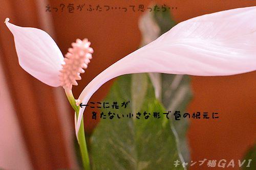 110803_5389.jpg