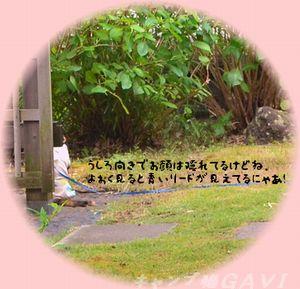 120818_8202a.jpg