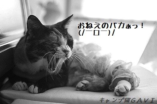 1210_1565.jpg