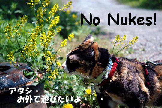 No_Nukesろ_0803b