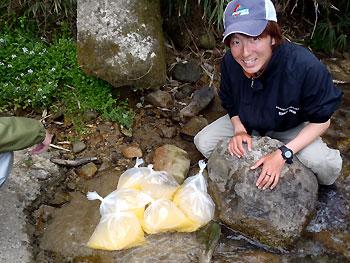 網走産ワカサギ卵…ビニール袋にダイレクトです