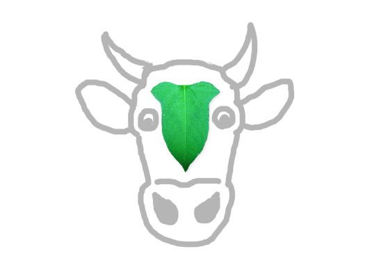 牛の額(ウシノヒタイ)