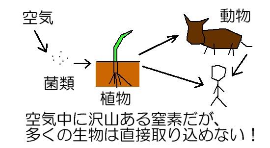 窒素のサイクル