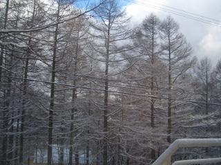 木々も雪化粧