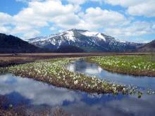 下ノ大堀川の水芭蕉と残雪の至仏山
