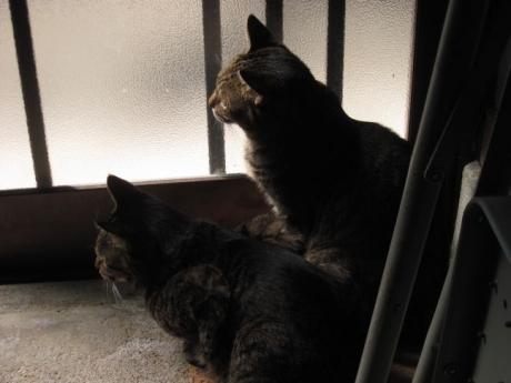 玄関の姉妹