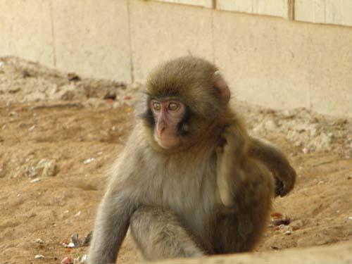 2011 1月 シロ-10 2