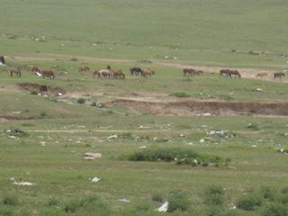 草原の馬とゴミ