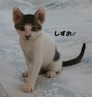 sizuo14.jpg