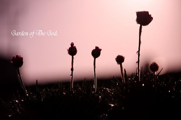 227-flower.jpg