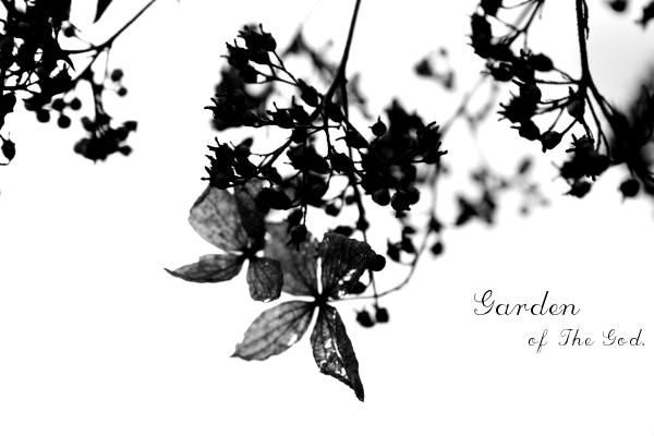 76flower.jpg