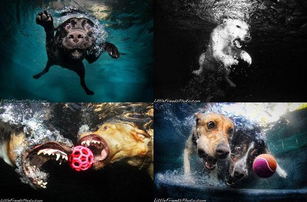 水中の犬4枚