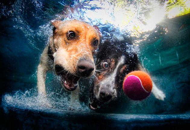 水中の犬8