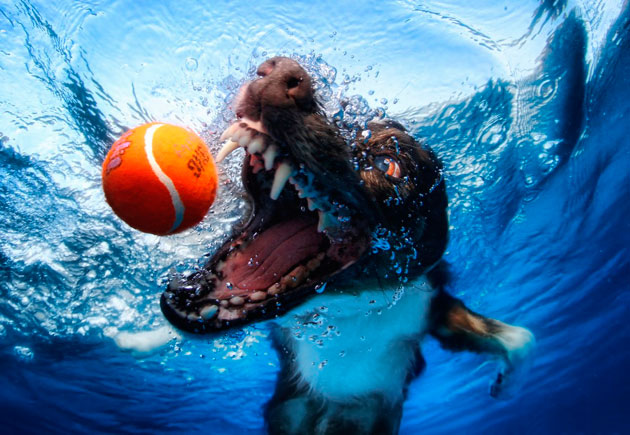 水中の犬2