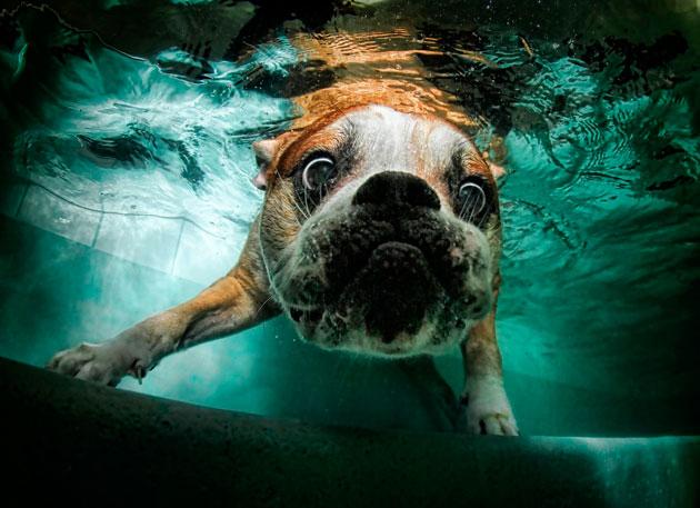 水中の犬5