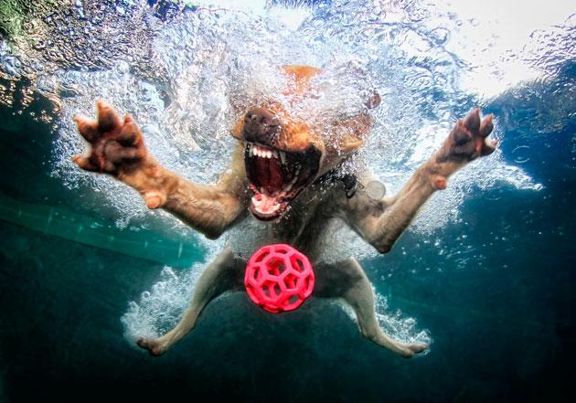 水中の犬x