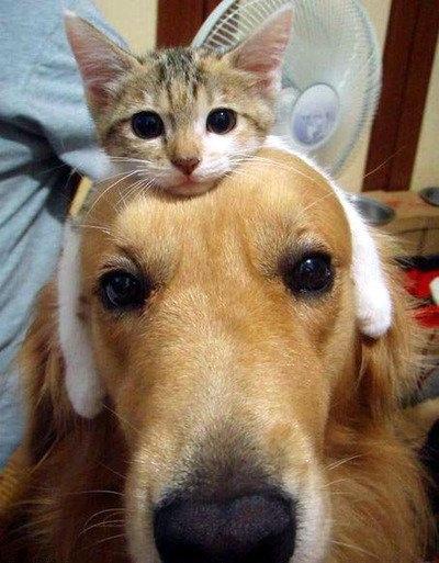 ネコとと犬