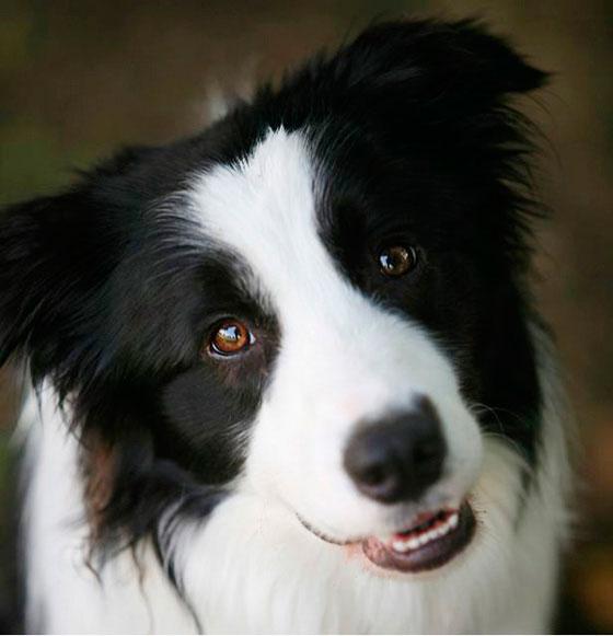 9-探偵犬