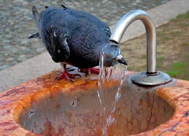鳥の水浴び