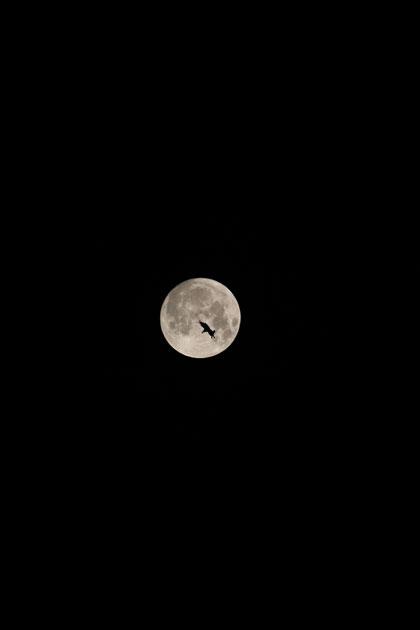 moon2IMG_9019.jpg