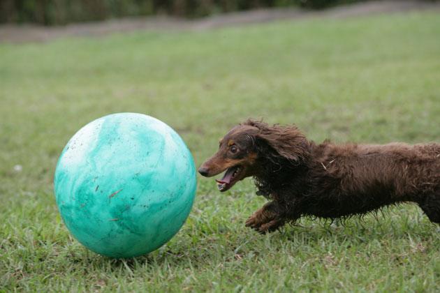 ボールとゴエ