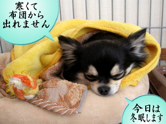 冬眠します