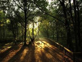 シャーウッドの森