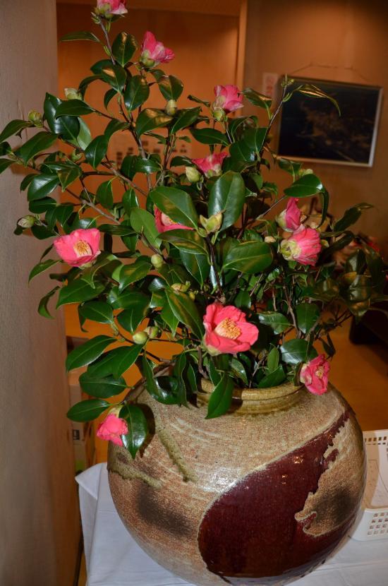 早咲きの藪椿 提供 伊豆大島椿花ガーデン