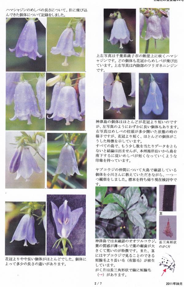 七島花の会 石橋 正行