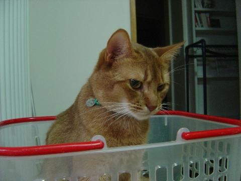 1歳の8月(2008.08.25)