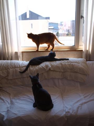 窓辺の集い(2012.04.14)