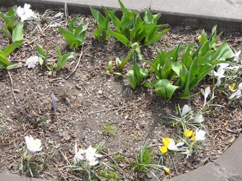桜(2012.04.22)