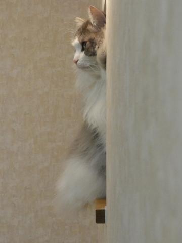 深窓の令嬢(2012.06.04)