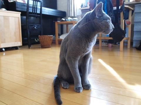 野良アレ03(2012.06.06)